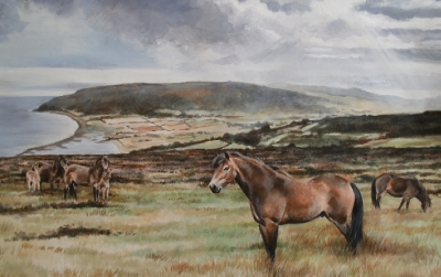 Exmoor Ponies at Porlock