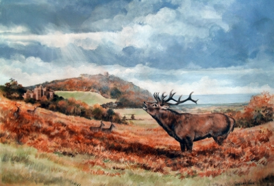 The Challenge - Red Deer at Dunster
