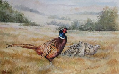 September Pheasants