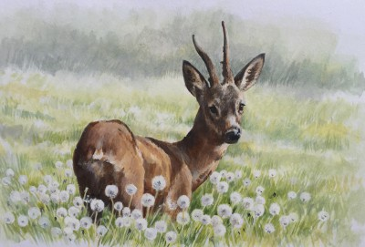 Roe Buck in Dandelions