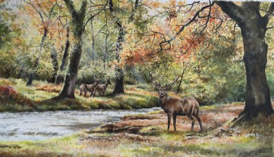 Red Deer at Horner Water