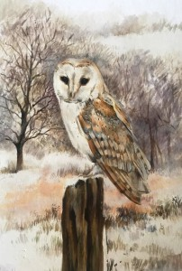 Barn Owl in Winter