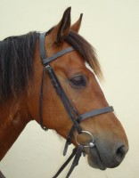 Jaffa - 15.1h Bay Gelding 13 years old Welsh Section D