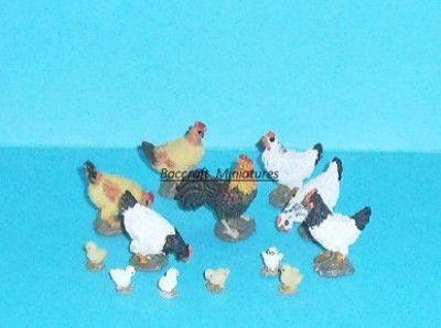 miniature cockerel, 6 hens and 6 baby chicks