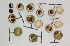 SELECTION OF CERAMIC HORSECHESTNUTS