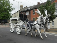 Our White Horse Drawn Hearse