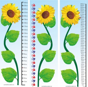 2.4m SUNFLOWER MEASURE - STANDARD (CM) OR NON STANDARD (HANDS)