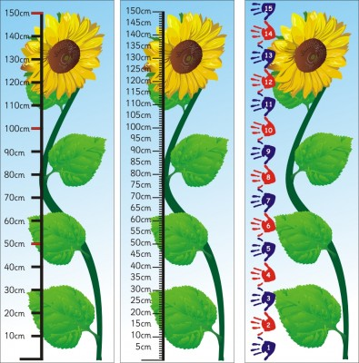 1.5m SUNFLOWER MEASURE - STANDARD  (CM) OR NON-STANDARD (HANDS)
