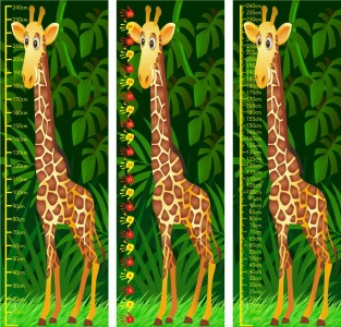 2.4m GIRAFFE MEASURE - STANDARD (CM) OR NON STANDARD (HANDS)