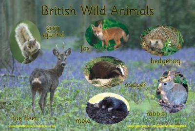 BRITISH WILD ANIMALS - PHOTOGRAPHIC BOARD