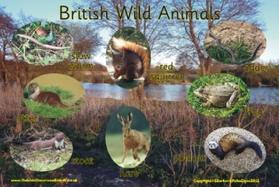 BRITISH WILD ANIMALS 2 - PHOTOGRAPHIC BOARD