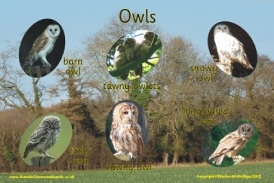 OWLS - PHOTOGRAPHIC BOARD