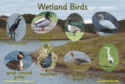 WETLAND BIRDS - PHOTOGRAPHIC BOARD