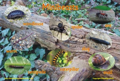 MINIBEASTS 1 - PHOTOGRAPHIC BOARD