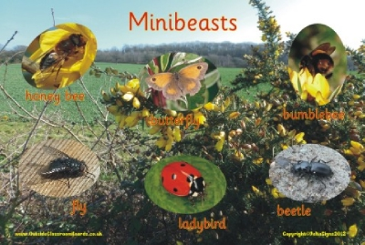 MINIBEASTS 2 - PHOTOGRAPHIC BOARD