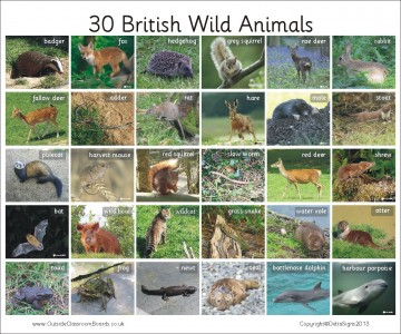 30 BRITISH WILD ANIMALS - PHOTO