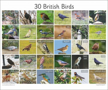 30 BRITISH BIRDS - PHOTO