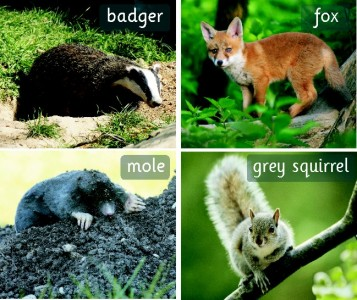 SET OF 30 PHOTOGRAPHIC INDIVIDUAL BRITISH WILD ANIMAL BOARDS