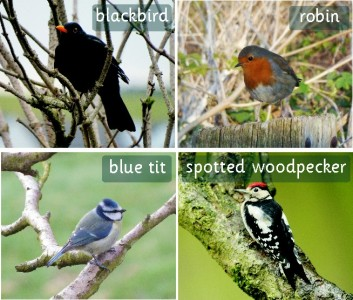 SET OF 30 PHOTOGRAPHIC INDIVIDUAL BRITISH BIRD BOARDS