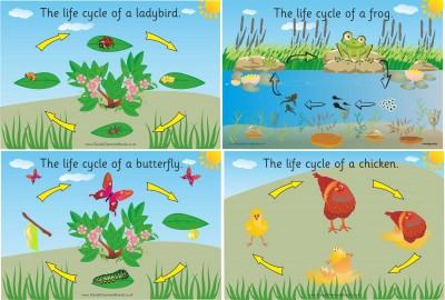 SET OF 4 ILLUSTRATED LIFE CYCLE BOARDS (FROG, BUTTERFLY, LADYBIRD & CHICKEN)