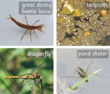 PHOTOGRAPHIC INDIVIDUAL BRITISH PONDLIFE BOARD