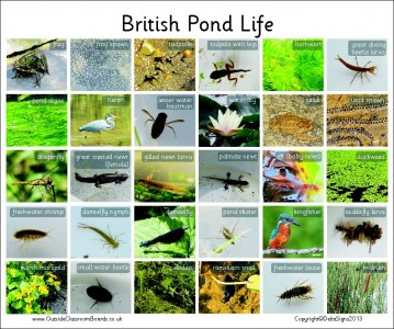 30 BRITISH PONDLIFE - PHOTO