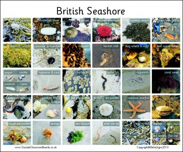 BRITISH SEASHORE - PHOTOGRAPHIC