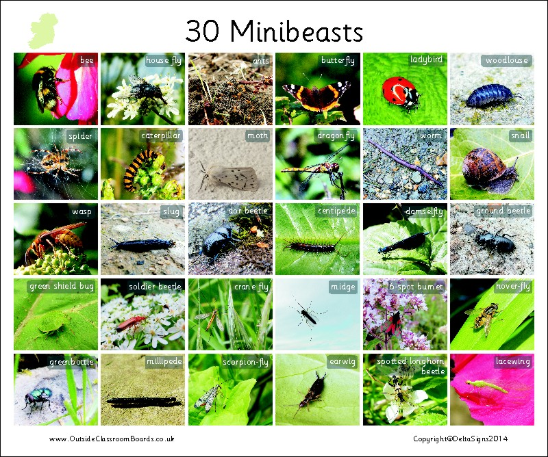 30 MINIBEASTS - IRELAND