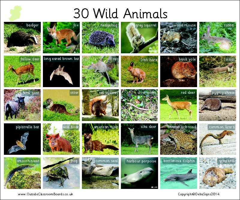 30 WILD ANIMALS - IRELAND