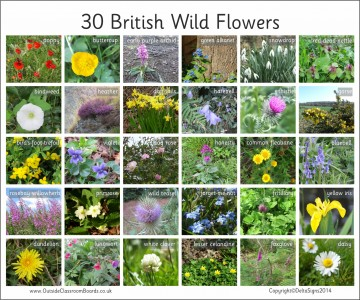 30 BRITISH WILD FLOWERS - PHOTOGRAPHIC BOARD