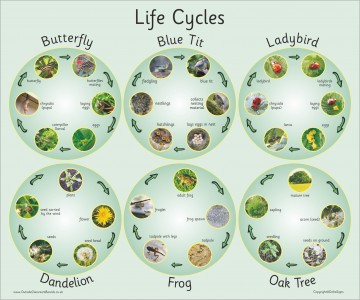 SIX PHOTOGRAPHIC LIFE CYCLES