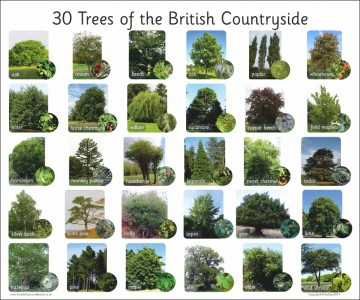 30 TREES OF THE BRITISH COUNTRYSIDE
