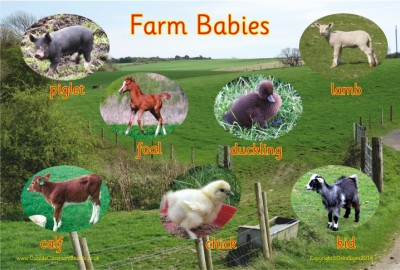 FARM BABIES - PHOTOGRAPHIC BOARD