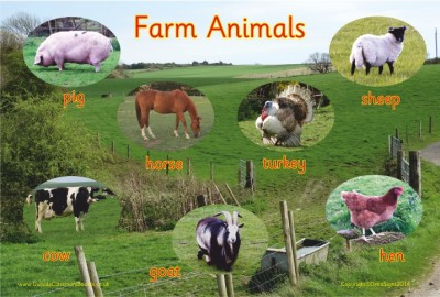 FARM ANIMALS - PHOTOGRAPHIC BOARD