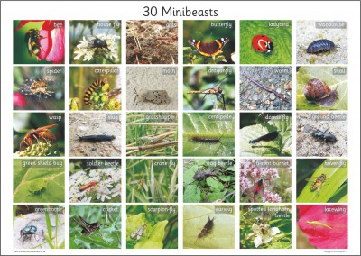 30 BRITISH MINIBEASTS A2 PAPER POSTER