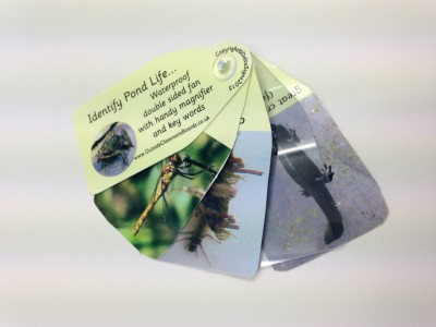 POND LIFE NATURE FAN WITH MAGNIFIER