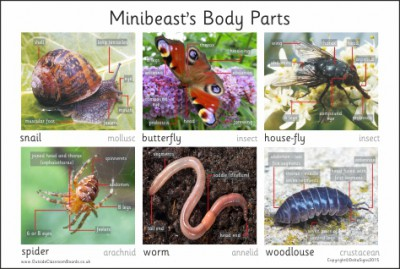 MINIBEAST BODY PARTS BOARD