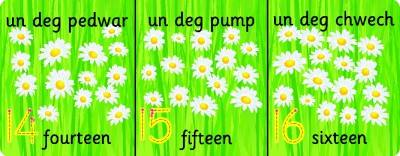 FLOWER BILINGUAL WELSH NUMBER RECOGNITION