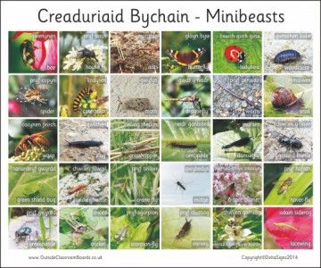 30 BILINGUAL WELSH BRITISH MINIBEASTS - PHOTO