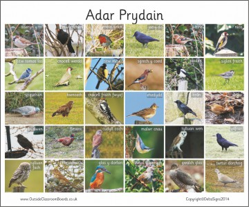 30 WELSH BRITISH BIRDS - PHOTO