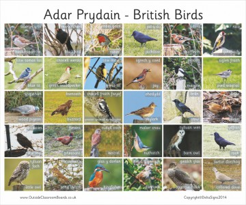 30 BILINGUAL WELSH BRITISH BIRDS - PHOTO