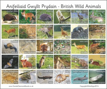 30 BILINGUAL WELSH BRITISH WILD ANIMALS - PHOTO