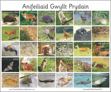 30 WELSH BRITISH WILD ANIMALS - PHOTO