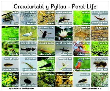 30 BILINGUAL WELSH BRITISH PONDLIFE - PHOTO