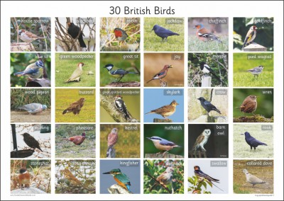 30 BRITISH BIRDS A2 PAPER POSTER