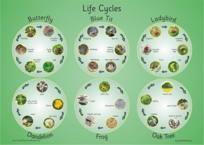 SIX PHOTOGRAPHIC LIFE CYCLES PAPER POSTER