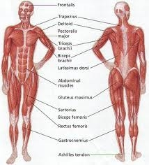 Different muscle groups which are worked on.